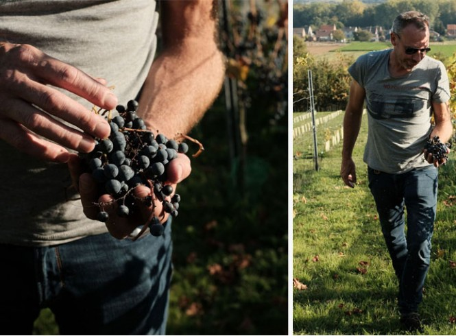 Wijnbouwer Patrick Nijs © An Eisendrath