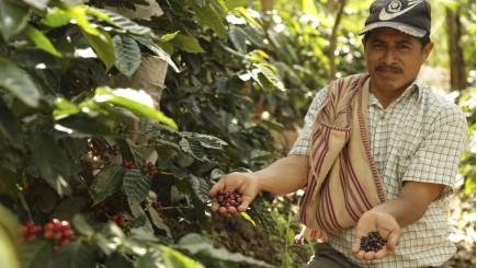 Puro Fairtradekoffie van Miko