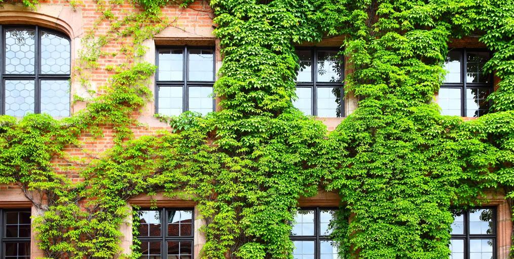 Verticale Tuin Binnen : De vele voordelen van een verticale tuin kmoinsider